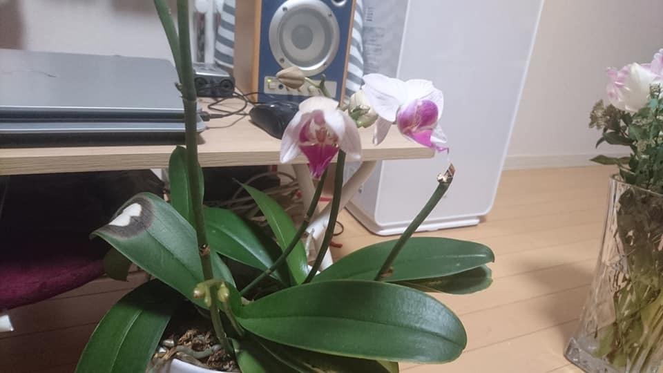 我が家の蘭の開花情報!_f0373339_15114216.jpg