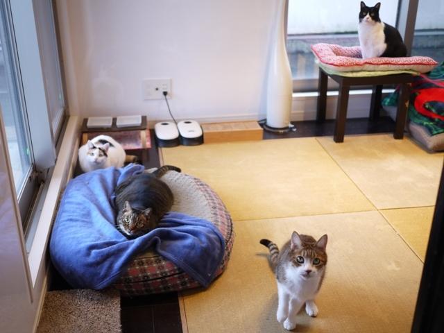 猫のお留守番 ウィンクくんララちゃんピケちゃんエンジェルちゃん編。_a0143140_22263589.jpg