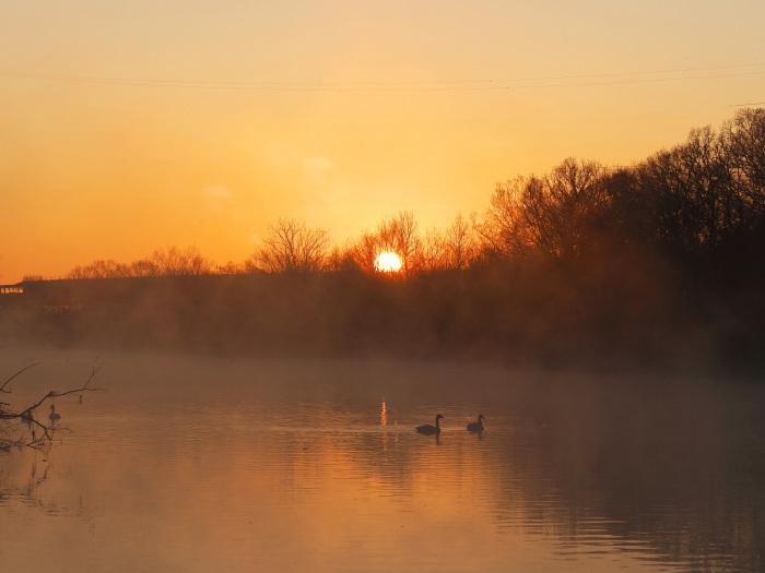 朝靄にコハクチョウ  Ⅱ_d0290240_07350133.jpg