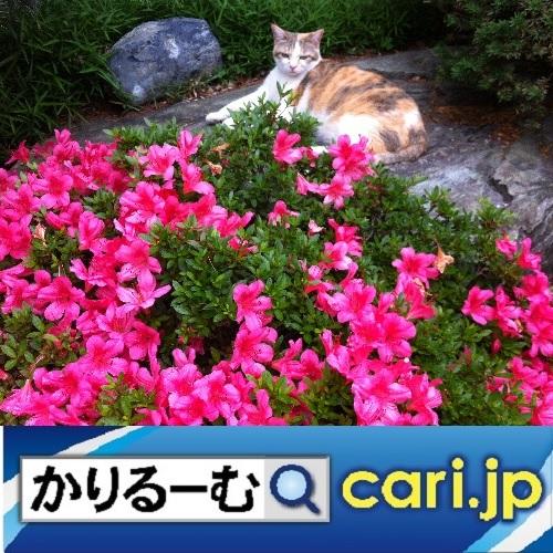 桃の節句(ひな祭り)のお祝い cari.jp_a0392441_21574950.jpg