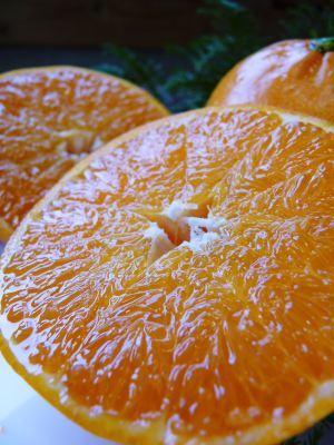 究極の柑橘『せとか』令和2年の先行予約受付スタート(後編) 小春農園の匠の技!大きく、美味しく、美しく_a0254656_16381908.jpg