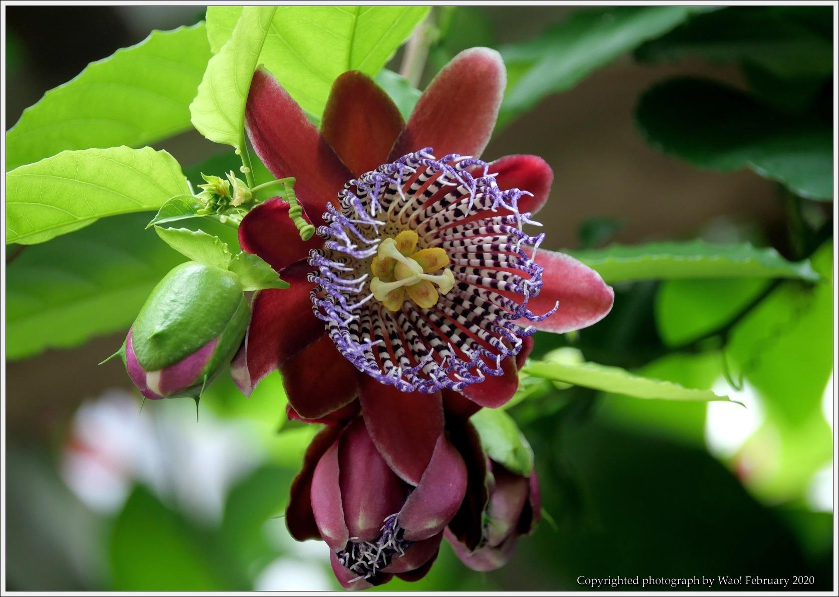 冬のバラと温室の花と蝶_c0198669_14040958.jpg