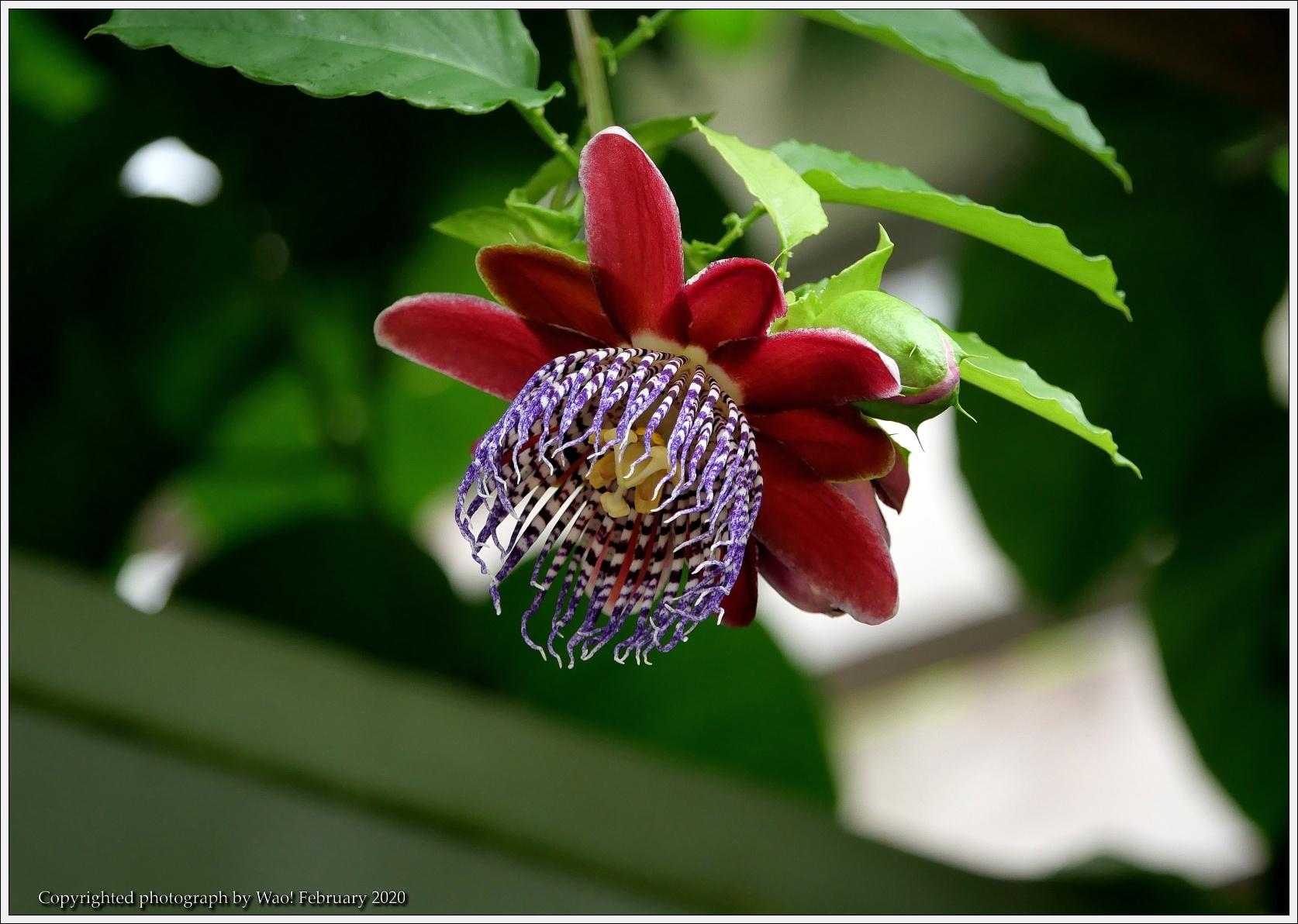 冬のバラと温室の花と蝶_c0198669_14042012.jpg