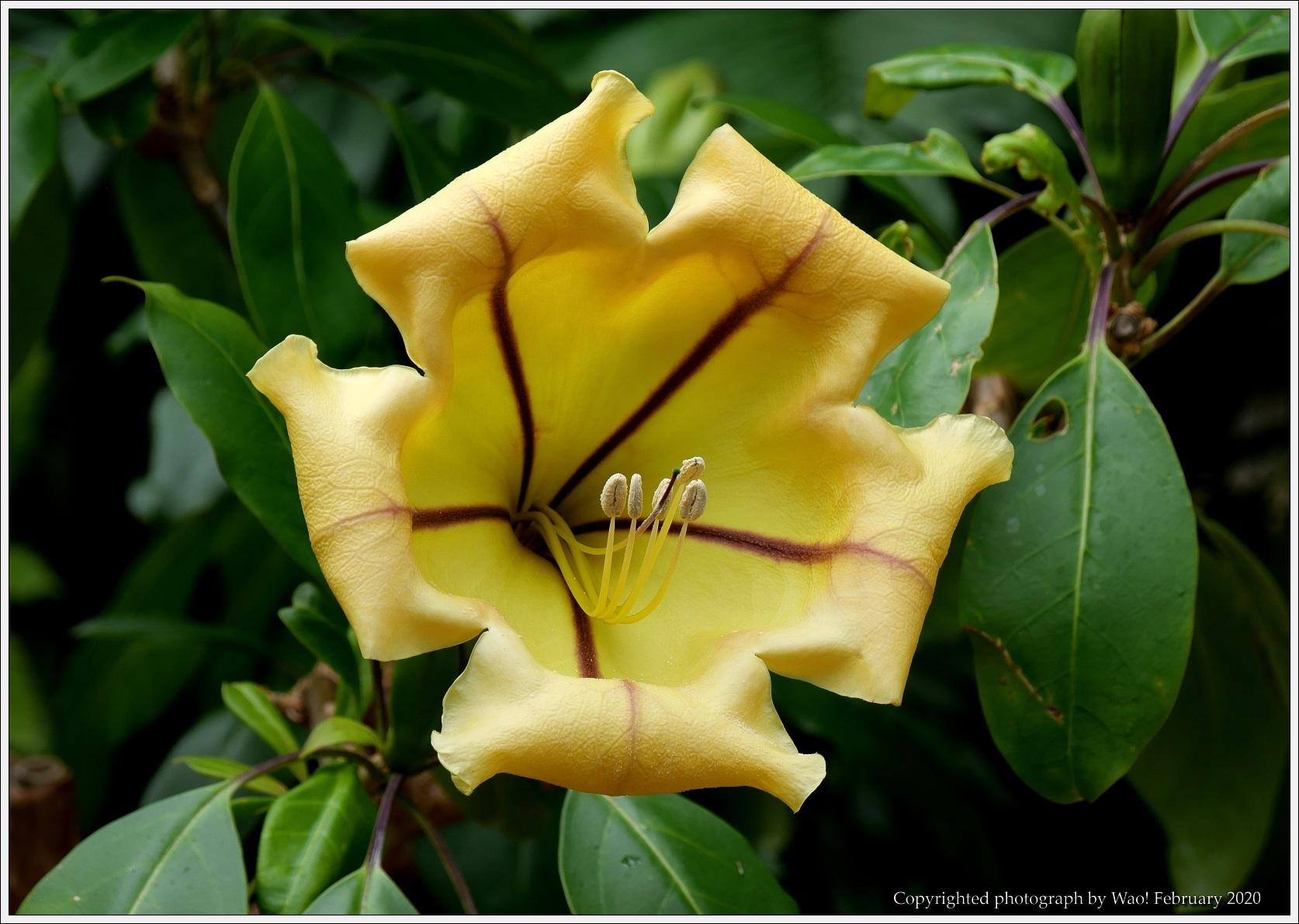 冬のバラと温室の花と蝶_c0198669_14045825.jpg