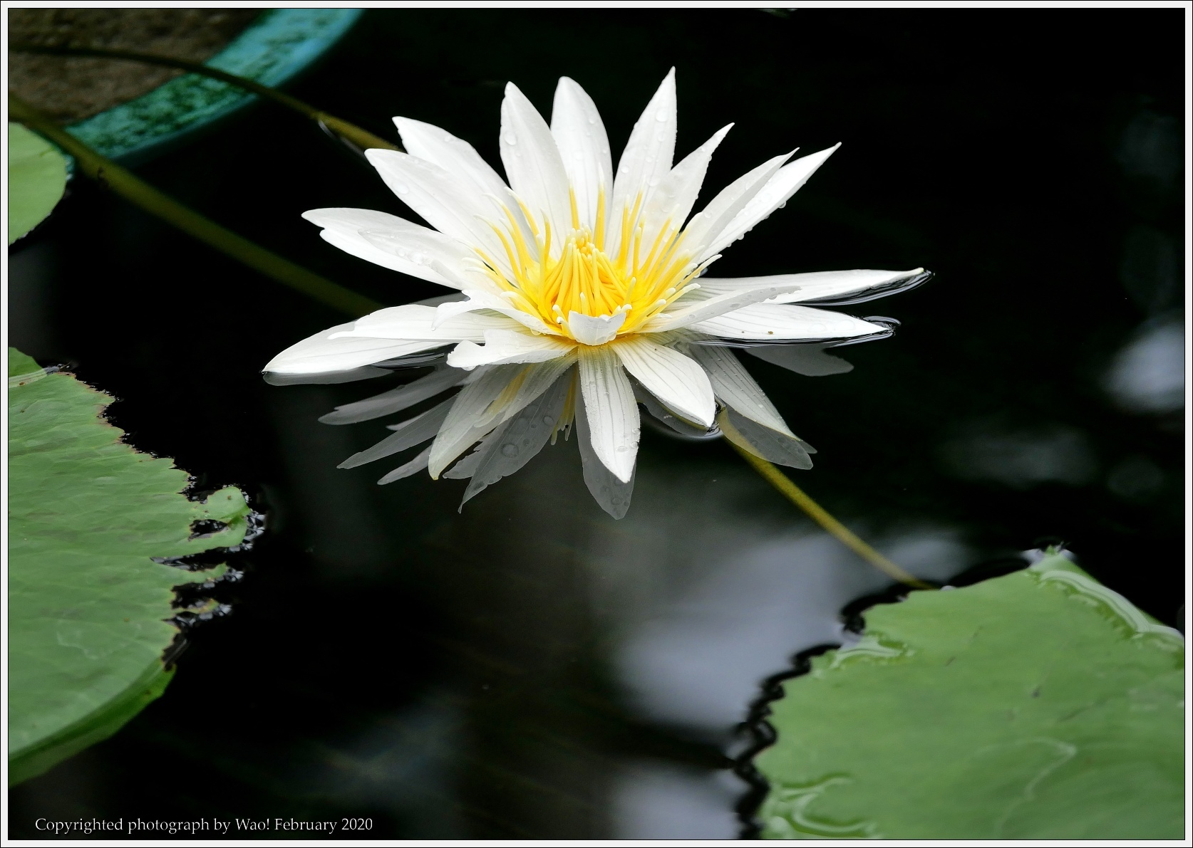 冬のバラと温室の花と蝶_c0198669_14055159.jpg