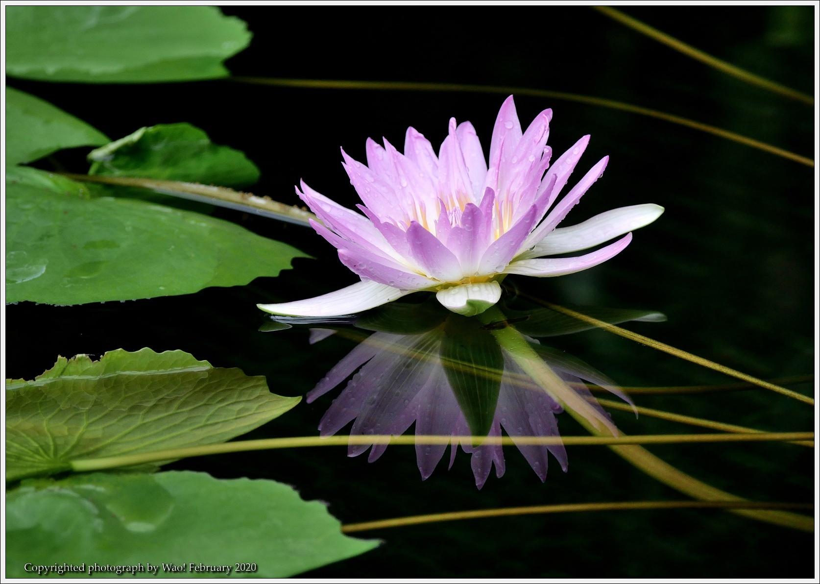 冬のバラと温室の花と蝶_c0198669_14055710.jpg