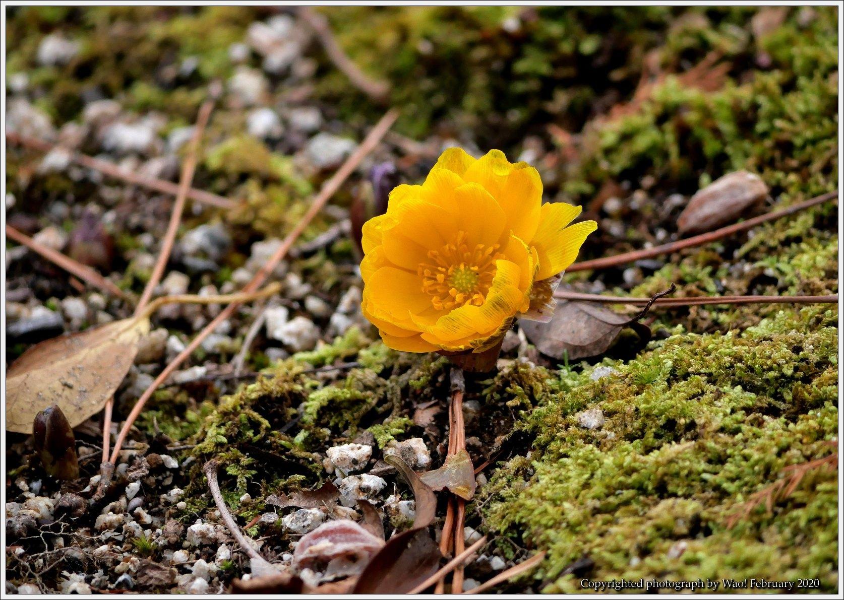 冬のバラと温室の花と蝶_c0198669_14072653.jpg