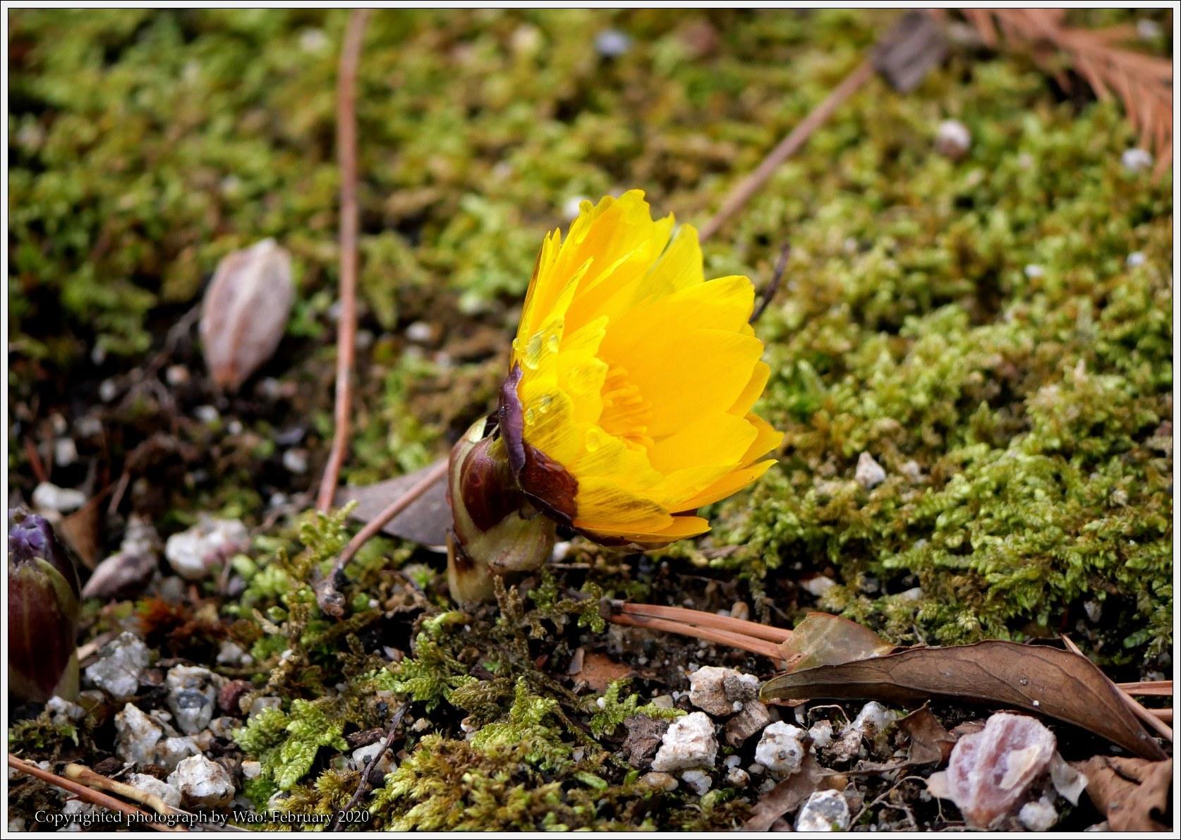 冬のバラと温室の花と蝶_c0198669_14073263.jpg