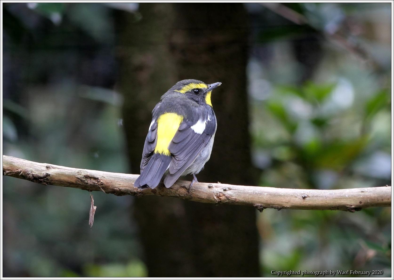 野鳥園のルリ・コマ・キビタキ_c0198669_15524432.jpg