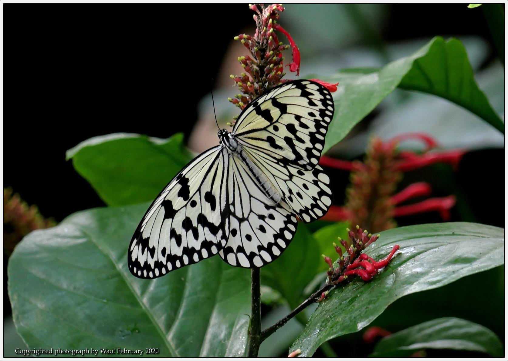 冬のバラと温室の花と蝶_c0198669_16040953.jpg