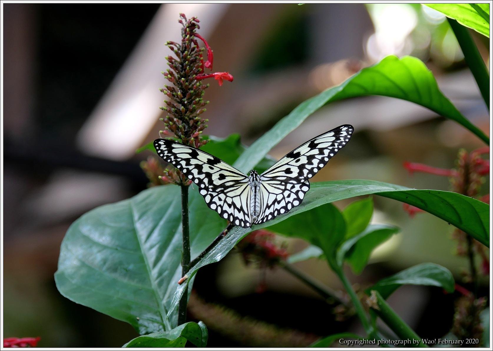 冬のバラと温室の花と蝶_c0198669_16052429.jpg