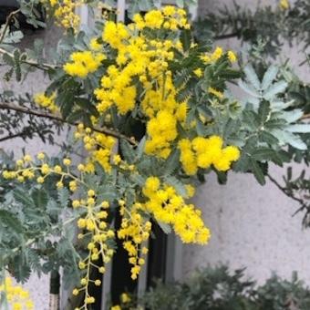春の色彩に溢れて_f0061394_10134396.jpg