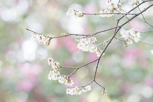 鎌倉・宝戒寺_b0145398_23183051.jpg
