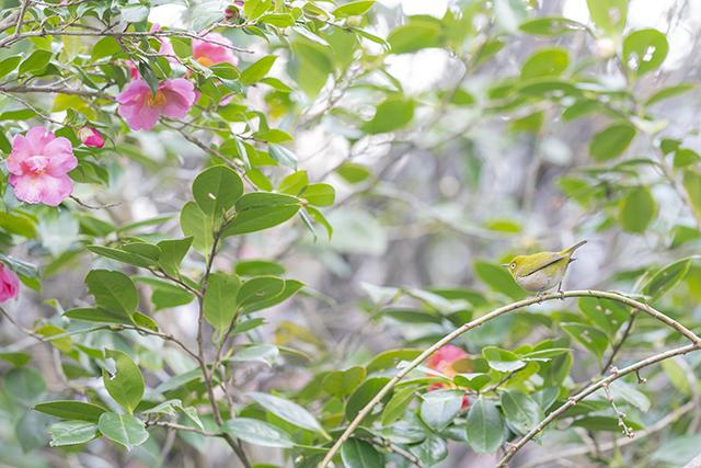 鎌倉・宝戒寺_b0145398_23202415.jpg
