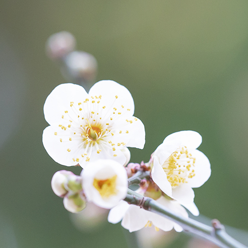 鎌倉・宝戒寺_b0145398_23471365.jpg