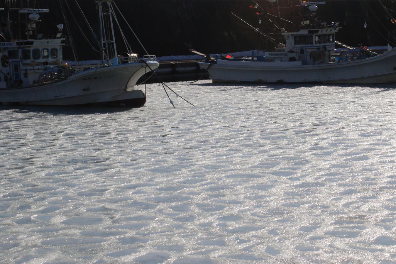 蓮葉氷 日高の漁港で2/11_c0360399_10171981.jpg