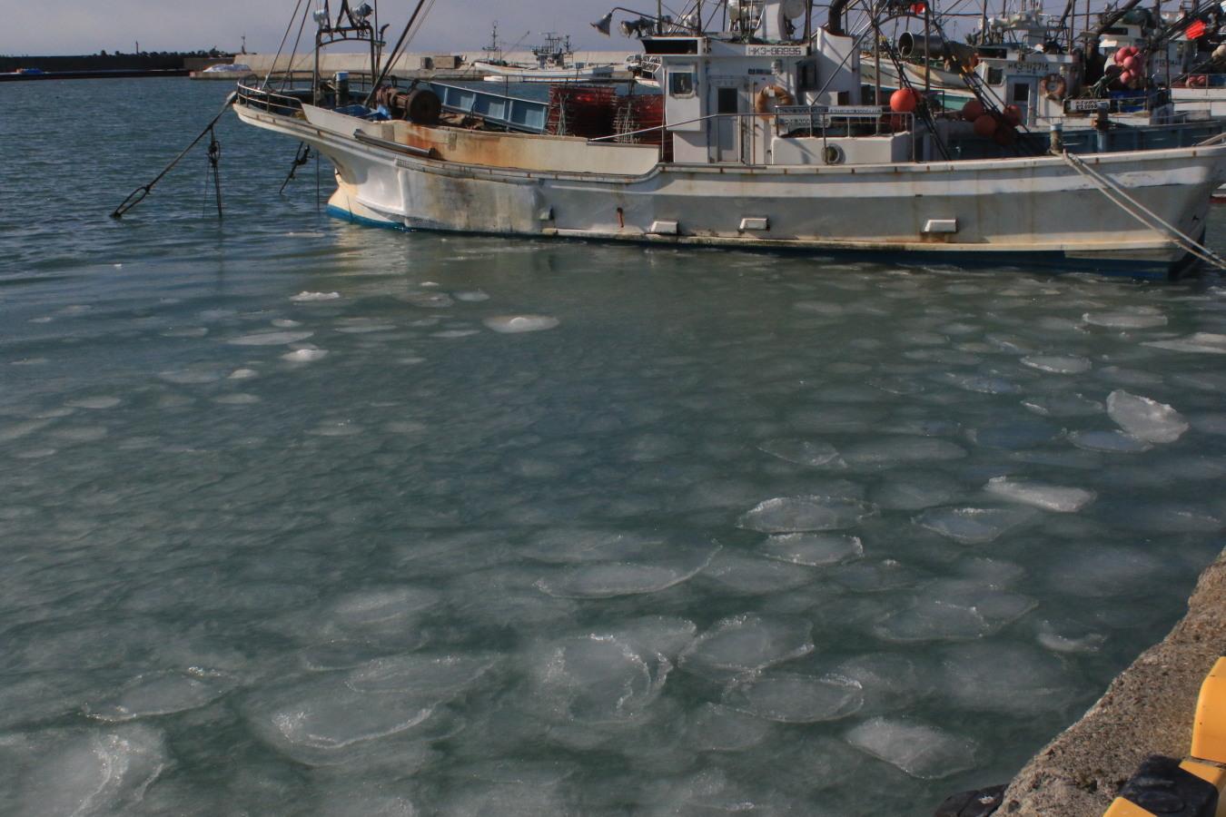 蓮葉氷 日高の漁港で2/11_c0360399_10300771.jpg
