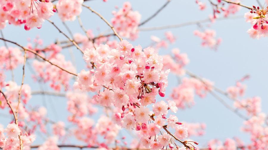 2月13日(木)本店ブログ☆ GMCユーコンデナリ XL あります!! ランクル ハマー アルファード_b0127002_17284808.jpg