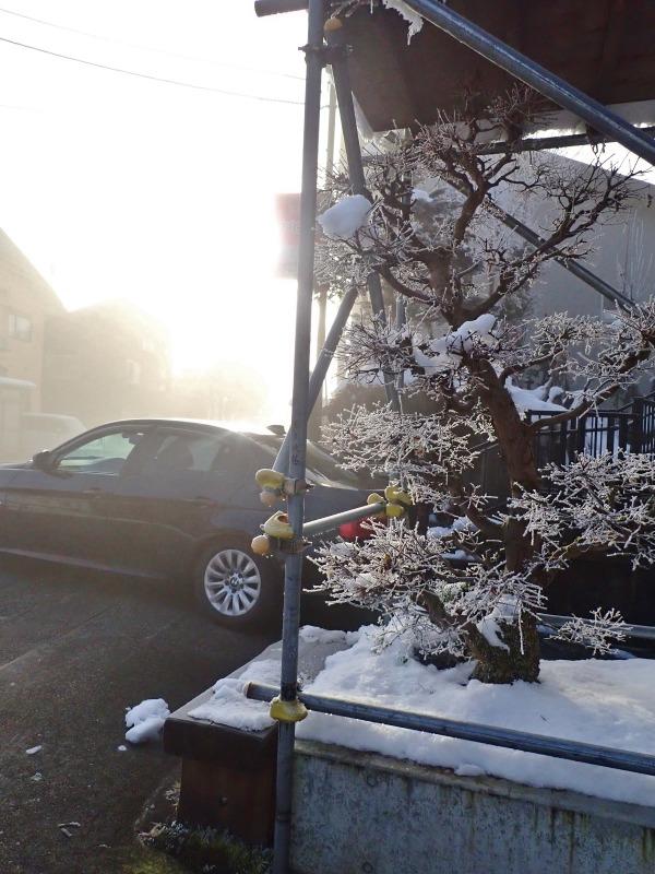 昨日の朝にはマイナス8.5度まで下がりました_c0336902_21100957.jpg