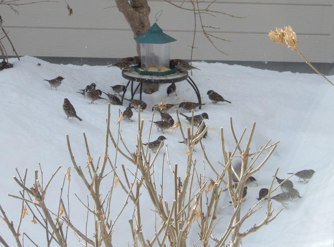 昨日より気温が高いが積雪はそれほど減らず_c0025115_22130496.jpg