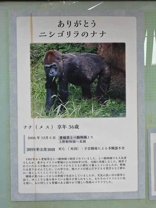 春のゴリラ一家~ありがとうナナさん(上野動物園 March 2019)_b0355317_22094840.jpg