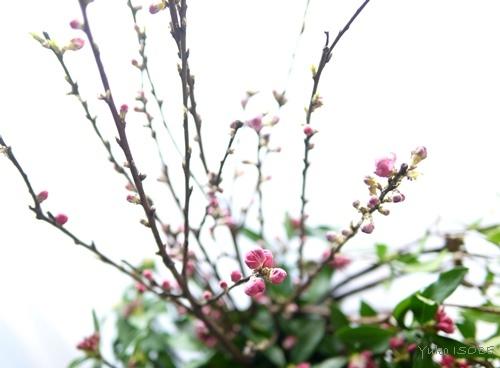 2月のおもてなしの中国茶レッスン_a0169924_12205005.jpg