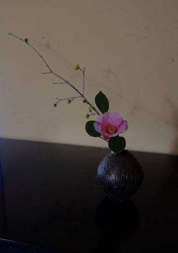 椿の季節_a0197730_21225372.jpeg