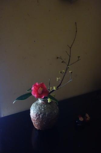 椿の季節_a0197730_23112367.jpeg