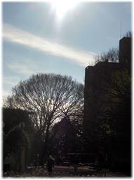 冬の空 落葉した樹木の姿が美しい。。。_d0221430_17024550.jpg