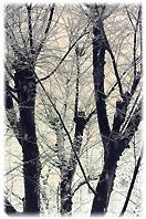 冬の空 落葉した樹木の姿が美しい。。。_d0221430_21413009.jpg