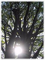 冬の空 落葉した樹木の姿が美しい。。。_d0221430_21565276.jpg
