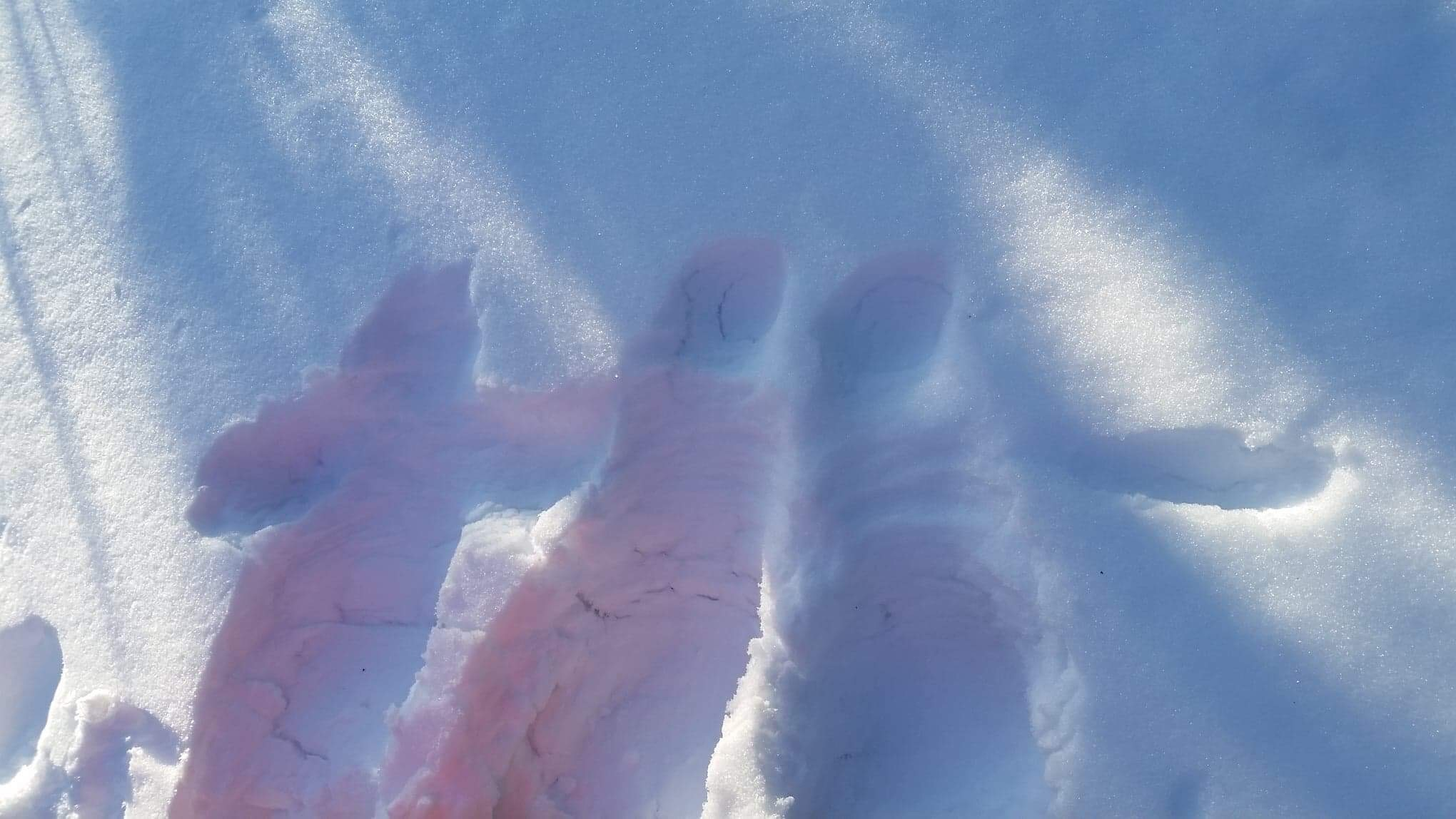 雪遊びに行ったときの写真_e0155231_02292414.jpeg