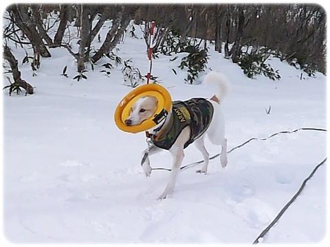 雪遊びの想い出_d0140133_13443352.jpg