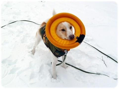 雪遊びの想い出_d0140133_13530434.jpg