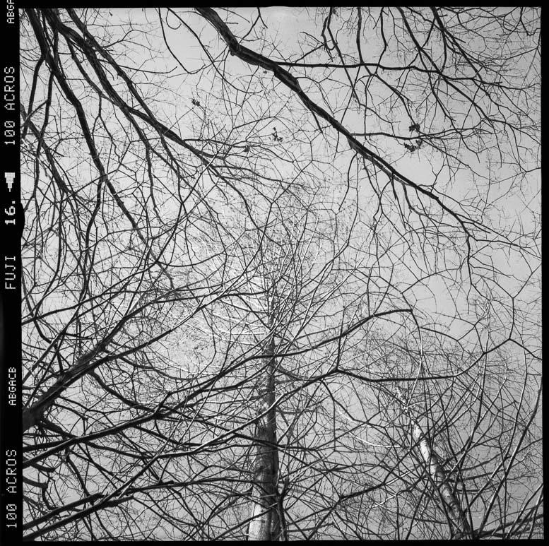 夏より明るい冬の公園_f0265234_22192102.jpg