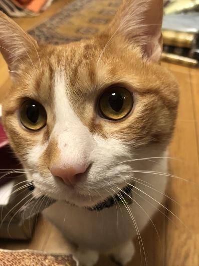 2月の猫の日_a0098635_19035552.jpeg