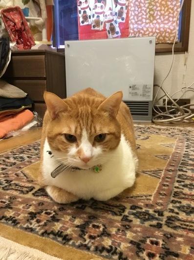 2月の猫の日_a0098635_19062286.jpeg
