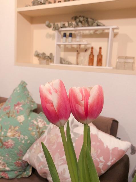 可愛いチューリップ サララ2月と3月の空き状況_f0140145_18534678.jpg