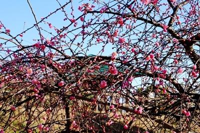 久しぶりの二上山は椿が美しかった、ので椿の作品をご紹介♪_b0194861_17235738.jpg