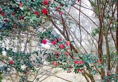 久しぶりの二上山は椿が美しかった、ので椿の作品をご紹介♪_b0194861_17245154.jpg
