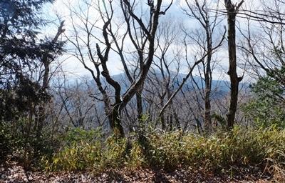 久しぶりの二上山は椿が美しかった、ので椿の作品をご紹介♪_b0194861_17253330.jpg