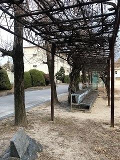 附中歴史探訪 記念碑・記念樹10_d0383872_15022363.jpg