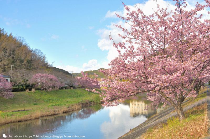 満開の春_c0319774_11080139.jpg