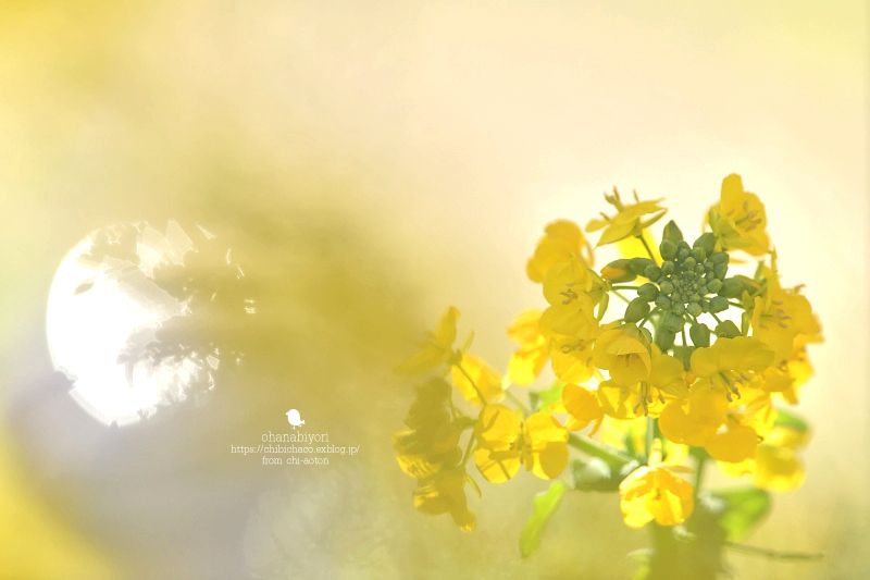 満開の春_c0319774_11081368.jpg
