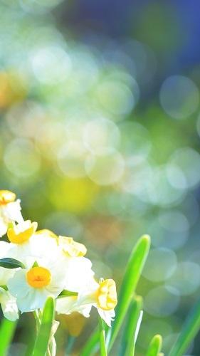 春のきざし_a0388976_21205984.jpg