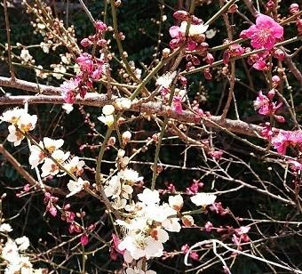 春_a0264383_12534122.jpg