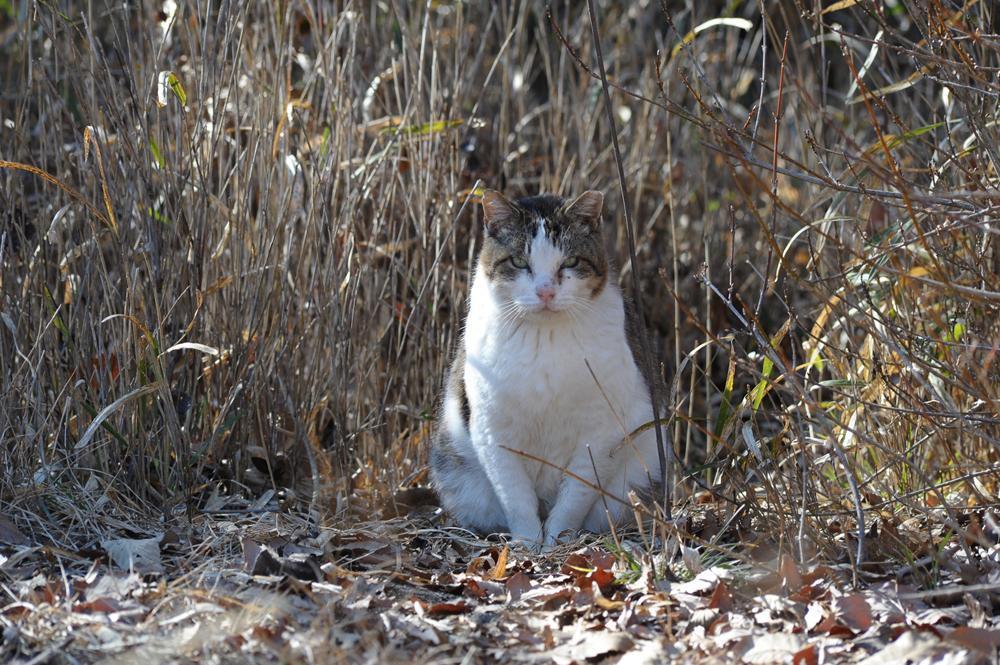 山で暮らす猫たち_f0159784_21140198.jpg