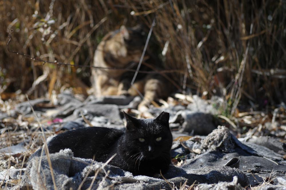 山で暮らす猫たち_f0159784_21140720.jpg