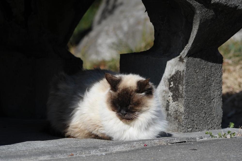 山で暮らす猫たち_f0159784_21141689.jpg