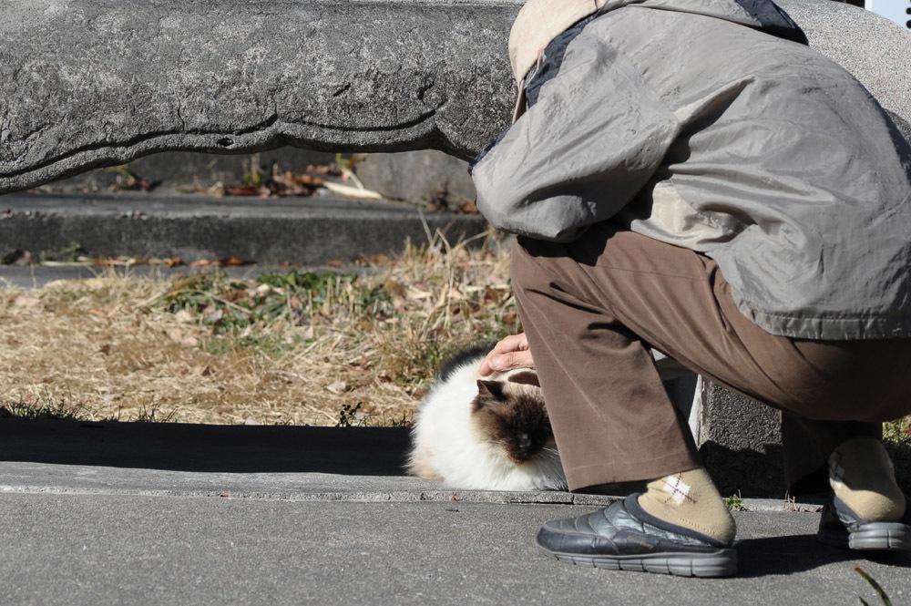 山で暮らす猫たち_f0159784_21142189.jpg